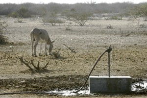 Drought-in-Africa-Horn-09